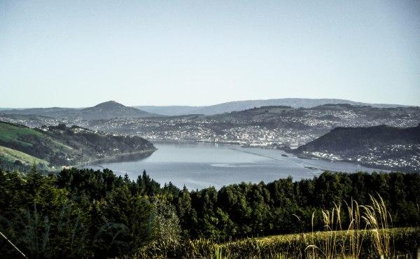 Dunedin and around