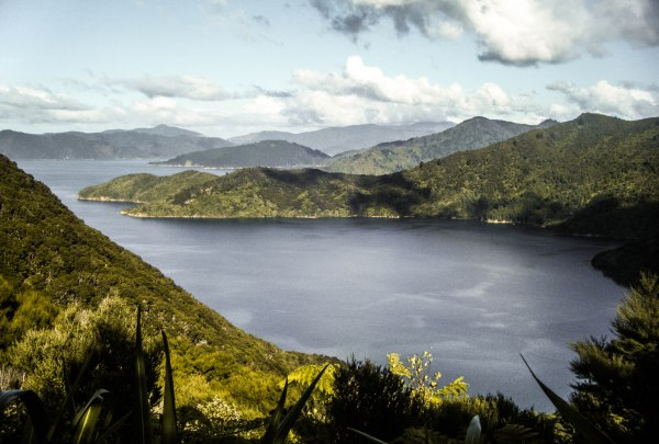 Hiking the Queen Charlotte Sound track