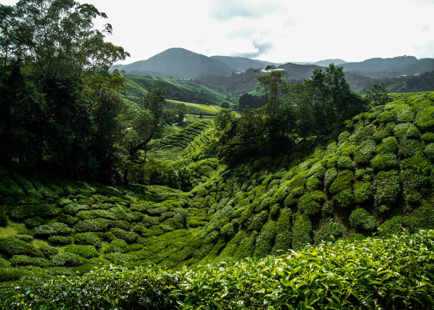 Temples and tea in Malaysia