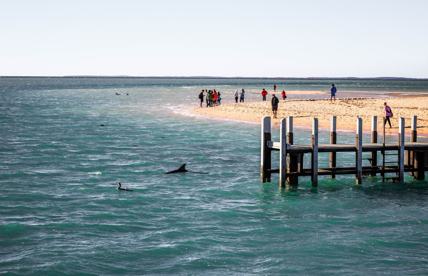 A Western Australia Road Trip Stromatolites and dolphins in Shark Bay