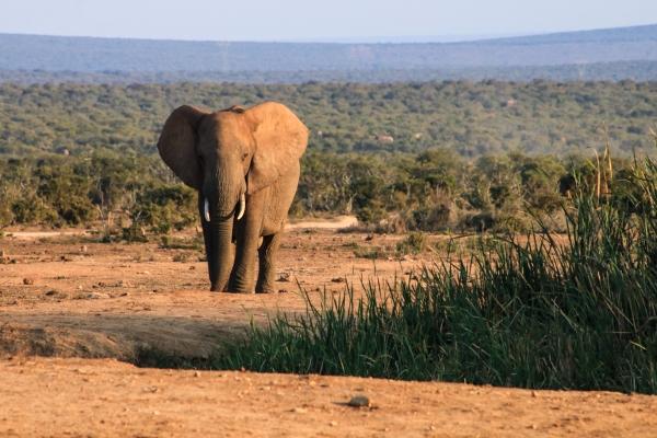 A mini safari in Addo Elephant Park