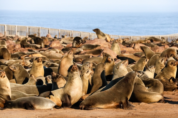 Shipwrecks and seals along the Skeleton Coast