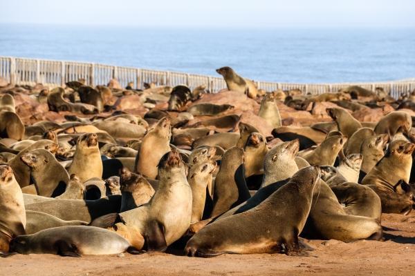 Shipwrecks and seals along the Skeleton Coast