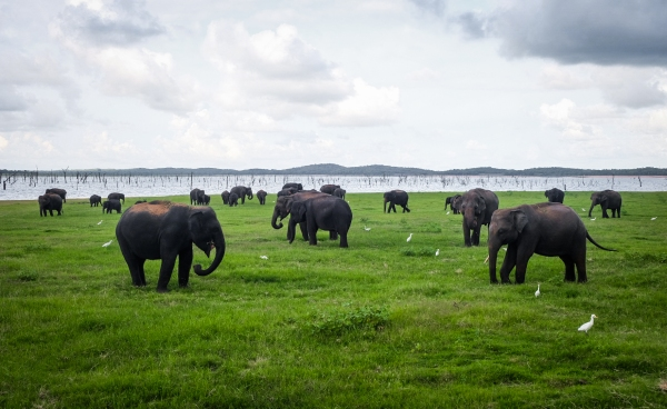 An elephant safari in Kaudulla National Park, Sigiriya